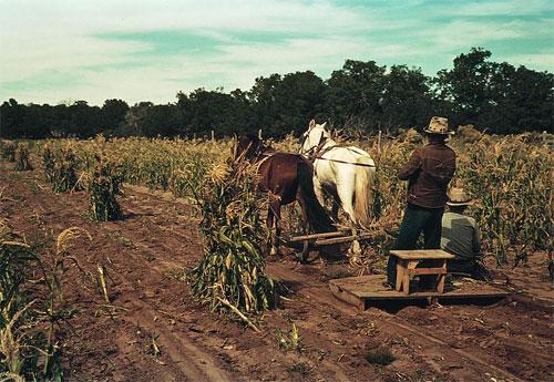 Сельское хозяйство США выращивание сельскохозяйственных культур